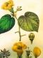Botanic10
